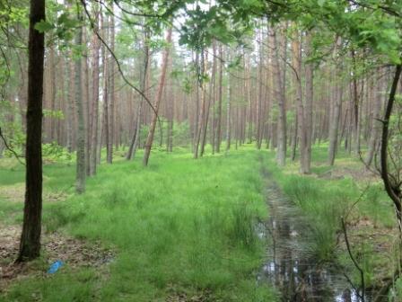 Leba Wald