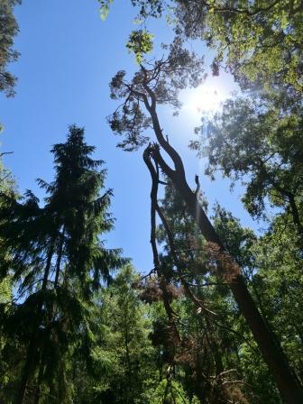 Nehrungswald...